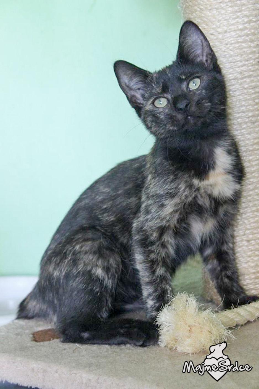 dlhé čierne péro tesné biele mačička