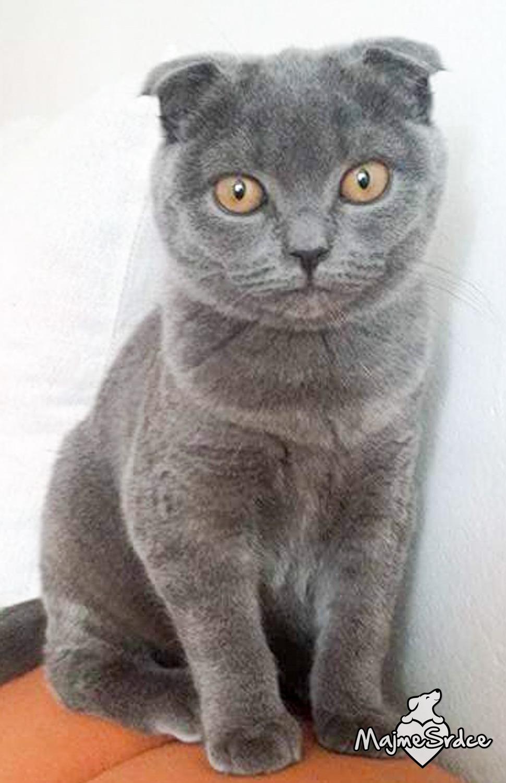 SUAVINEX - Fľaša 150 ml - anatomický cumlík silikón - Modrá mačička.