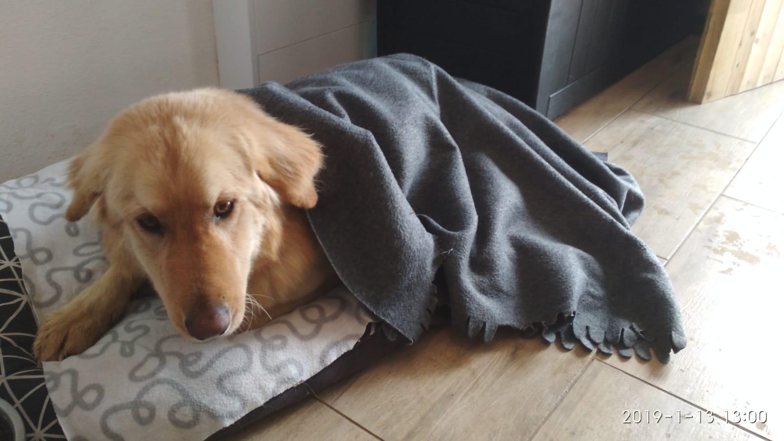 ROCKY – 2 roky   pes – MAJME SRDCE f5ce4414150