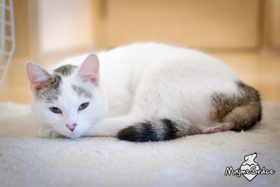 Extrémne malé mačička pics